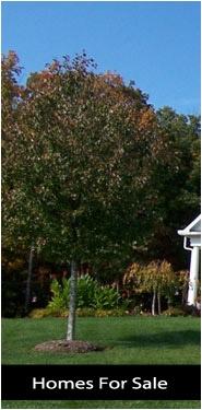 Search Alexandria VA homes for sale