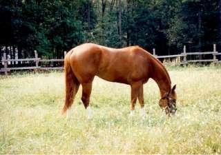 Equestrian Real Estate, NC