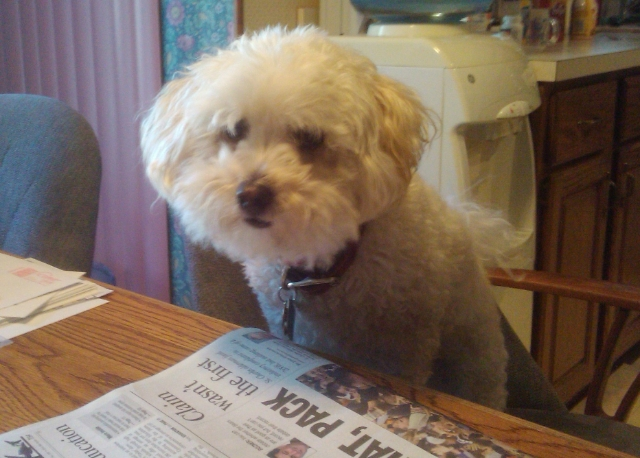 Real Estate Newspaper Dog