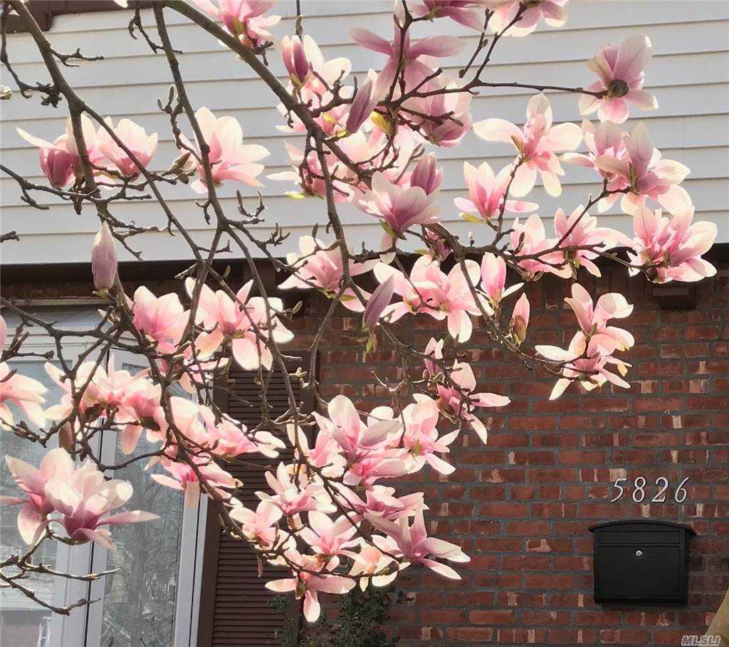 Single Family Residence, Colonial - Bayside, NY