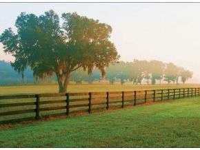 Farms for sale in Ocala FL Keller Williams Cornerstone