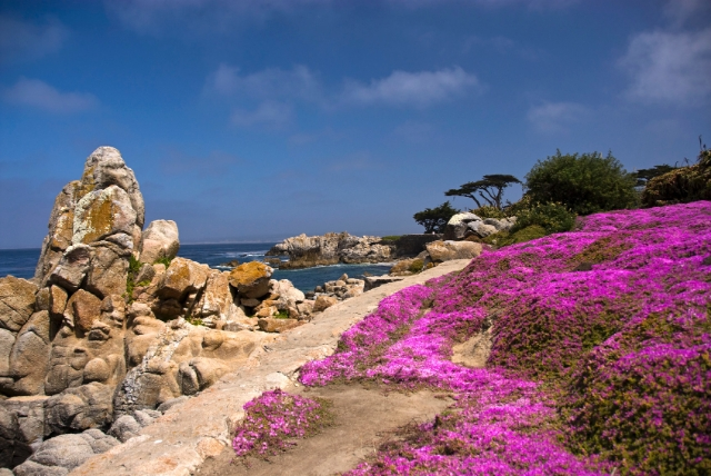 Pacific Grove, CA Real Estate Listings